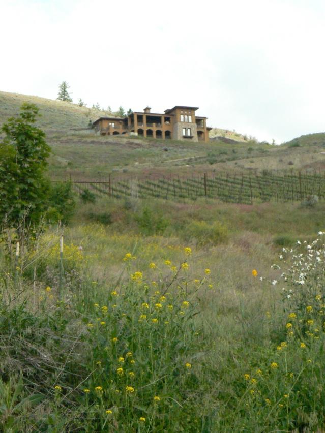 Monolithic House with vineyard, grassland, and weeds in Bella Vista