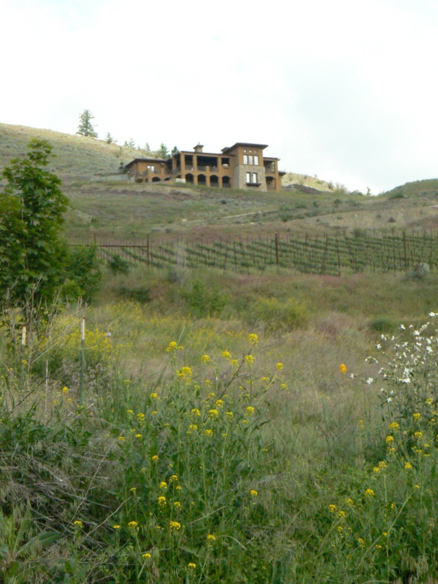 Monolithic House with vineyard, grassland, and weeds in Bella Vista