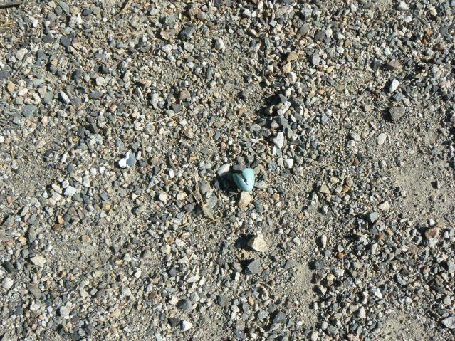 robin's egg broken on the gravel