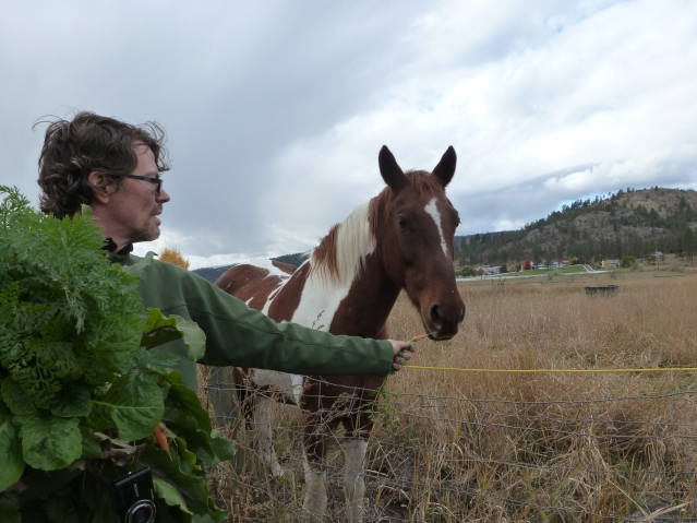 Professor Claude Desmarais Offers a bio-dynamic carrot to a Roberts Lake Horse