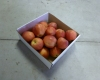 Royal Gala Apples Caught Crossing the US-Canadian Border