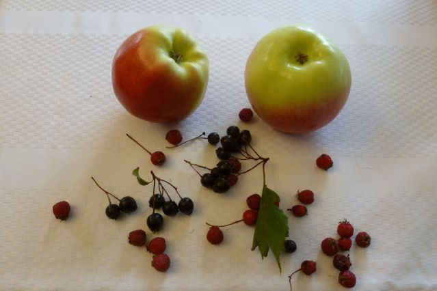 Ambrosia, Anonymous, and Malus Fusca apples.