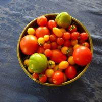 Six Month Tomato Salad