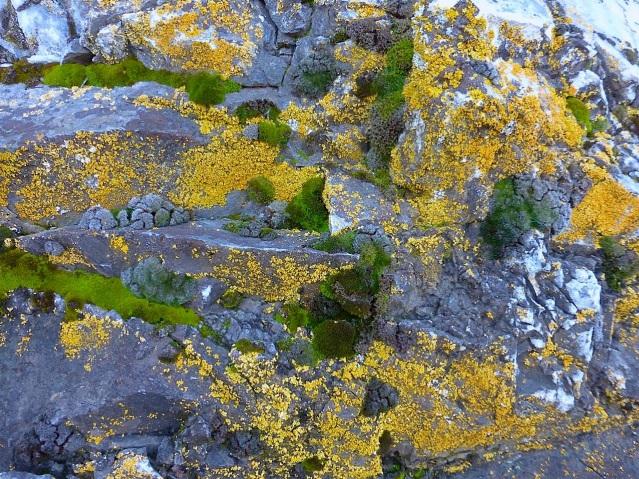 yellowbluegreen