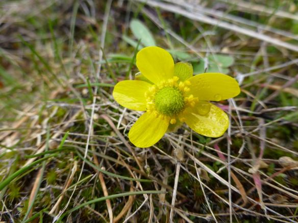 yellowflower