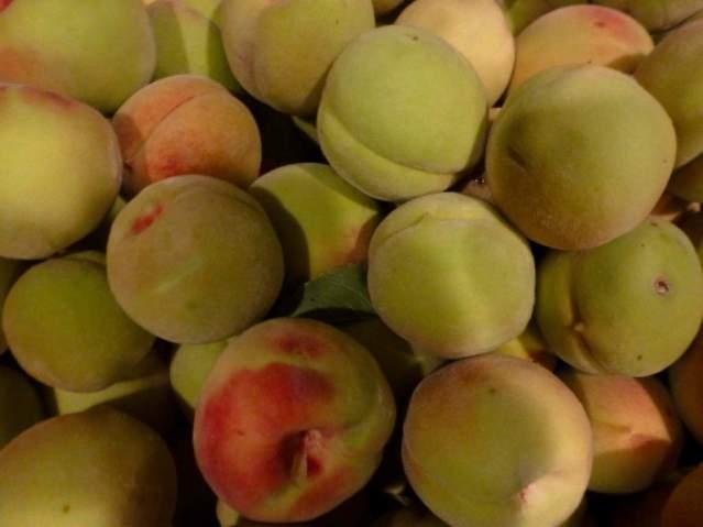 peachessiberian