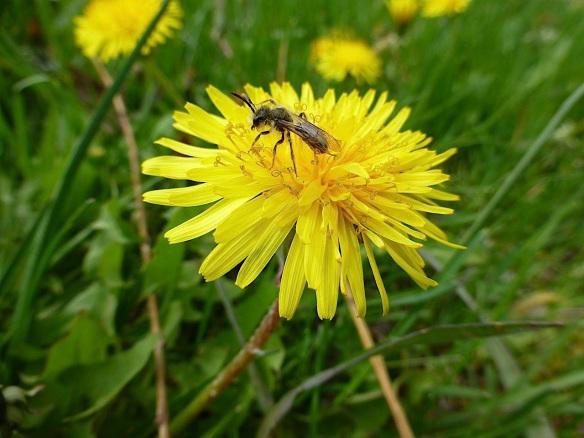 yellow1