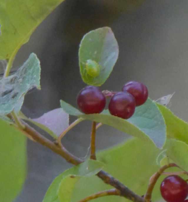 greenguy2