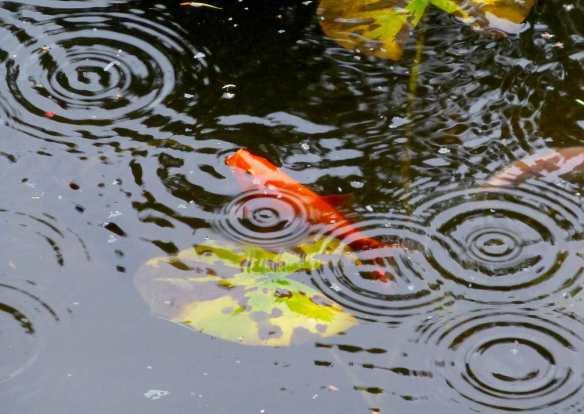 fishrain
