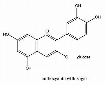 anthocyanin_molecule