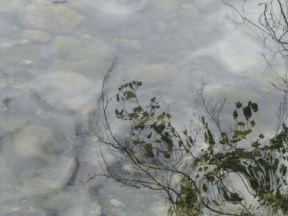 Vernon Creek