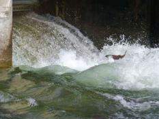 Nk'mp Salmon, Okanagan Falls Dam