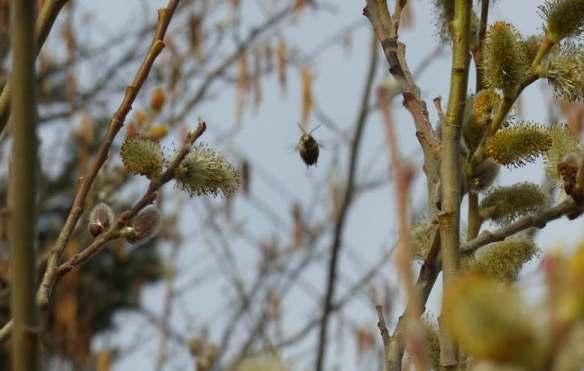 flybee