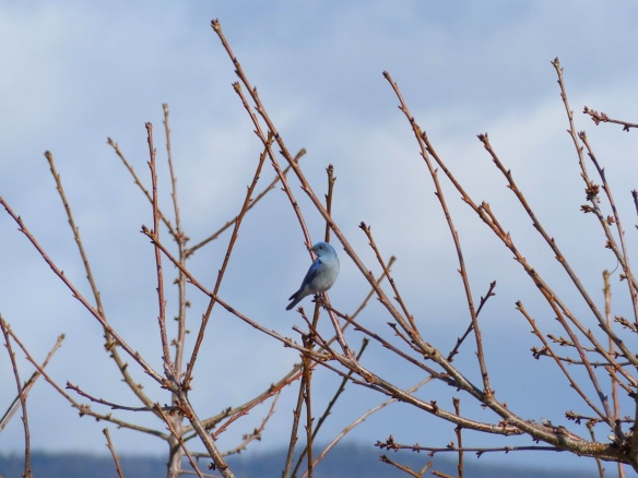 The Bluebirds are Here: Part 2