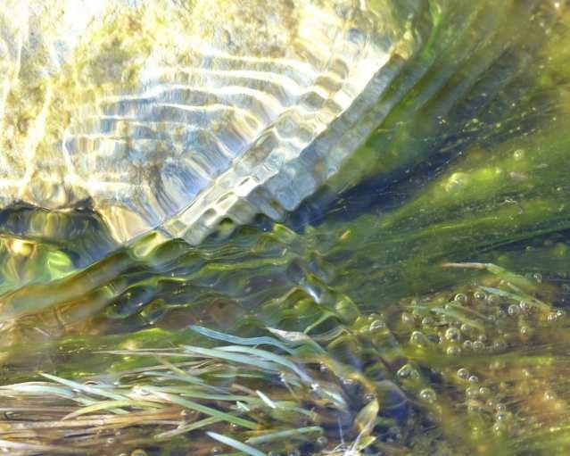 ripply2