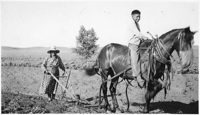 800px-Horse_pulling_plow_-_NARA_-_285314