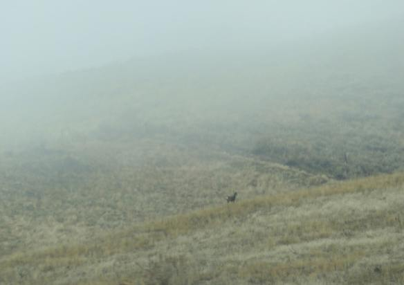 fogbuck