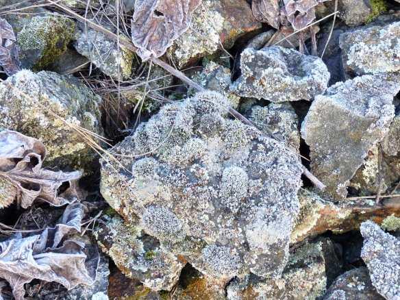 frostmoss