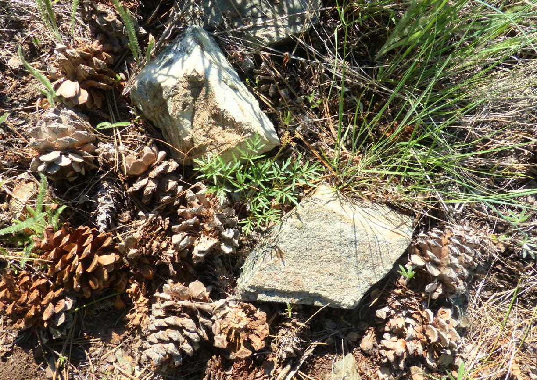 Okanagan rock gardens aren t just about rocks okanagan for Landscaping rocks kelowna