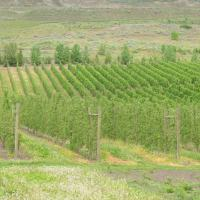 High Quality Apples in the Okanagan Valley?