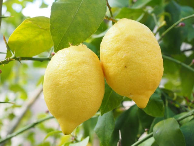 lemon-1117568_960_720