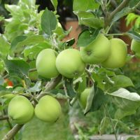 Sustaining the Okanagan 10: 24 Apple Pies