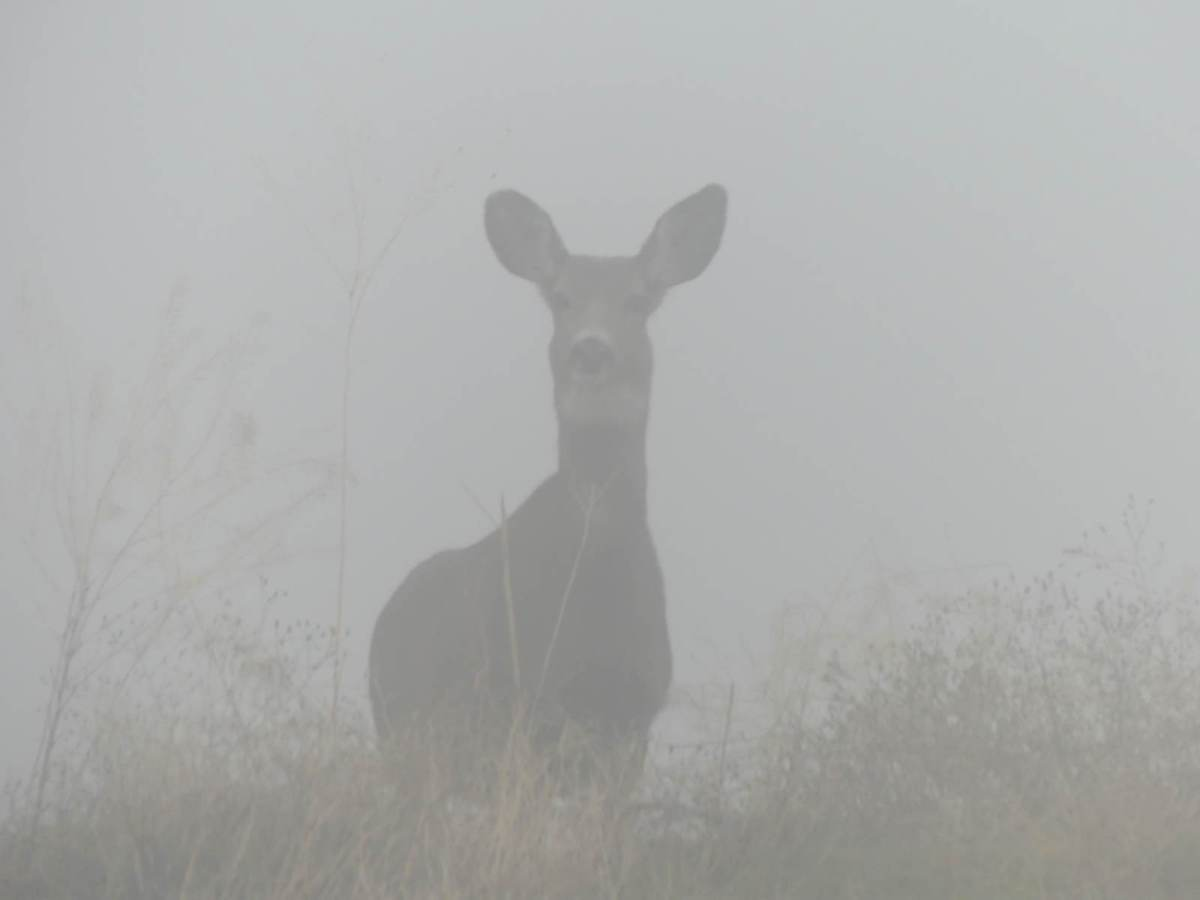 Watching Deer in the Fog
