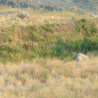 Deer Watching Over the Years