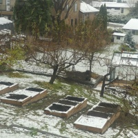 The Garden Comes Along in the Snow