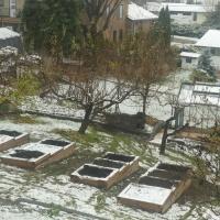 The Garden Comes Along in the Snow