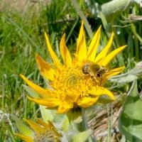 The Amazing Long-Distance Relationships Between Bee, Flower and Bird