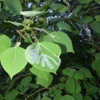 Predation, Cottonwoods and Your Friendly Neighbourhood AI