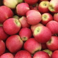 Climate Resilience in Okanagan Agriculture 4: Rewilding Apples