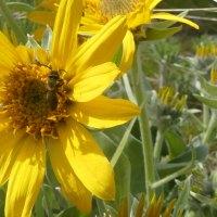 Brave Bees... Perhaps
