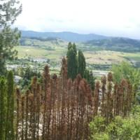Okanagan Landscaping Tip