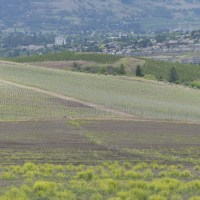 Do Temporary Foreign Workers Feed the Okanagan?