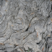 Roots Are Not Wood & Trees Are Communities of Water: What the Future Promises in the Fire Forest