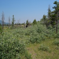 Cattle are Burning Down British Columbia
